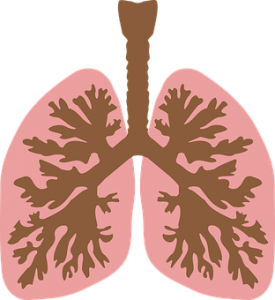 Lung is one of the most important organs in the human body.